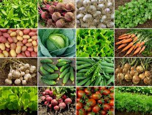 organic food - ginger people